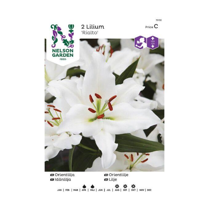 Blomsterløk av orientlilje Rialto