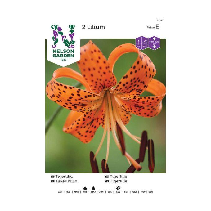 Nelson Garden blomsterløk - oransje tigerlilje lancifolium