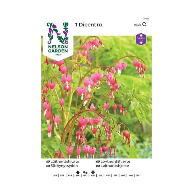 Nelson Garden blomsterløk - løyntnantshjerte