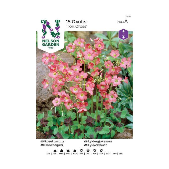 Nelson Garden blomsterløk - rosa lykkegjøkesyre Iron Cross