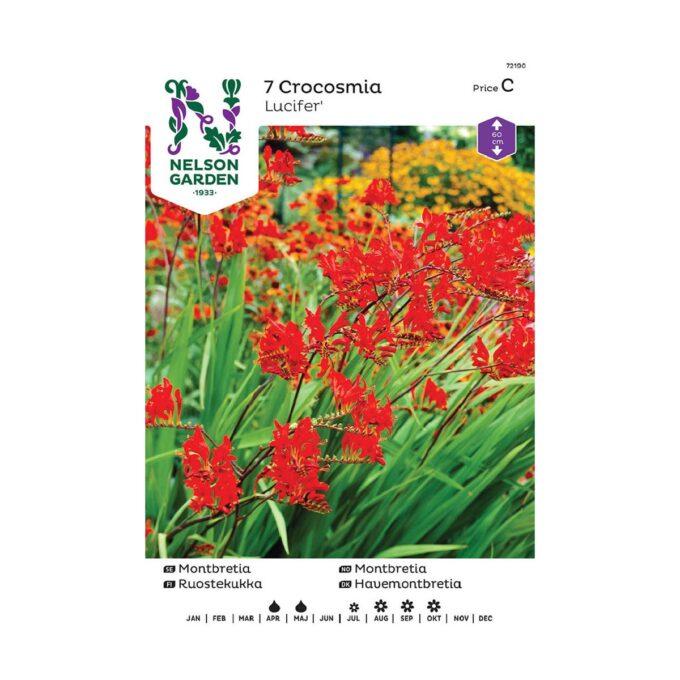 Nelson Garden blomsterløk - Montbretia Lucifer, rødorange