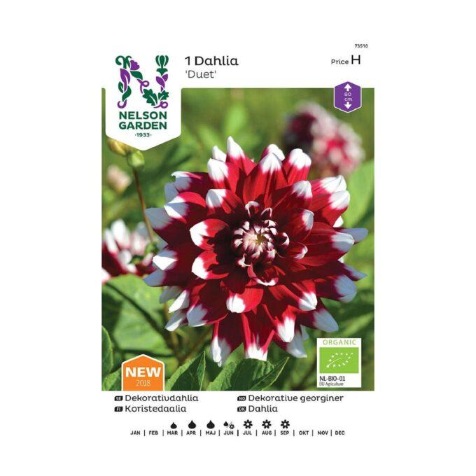 Nelson Garden blomsterløk - georgine Duet