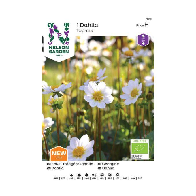 Frøpakke av Nelson Garden blomsterløk - topmix georgine