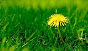 Plantevern og ugressmidler