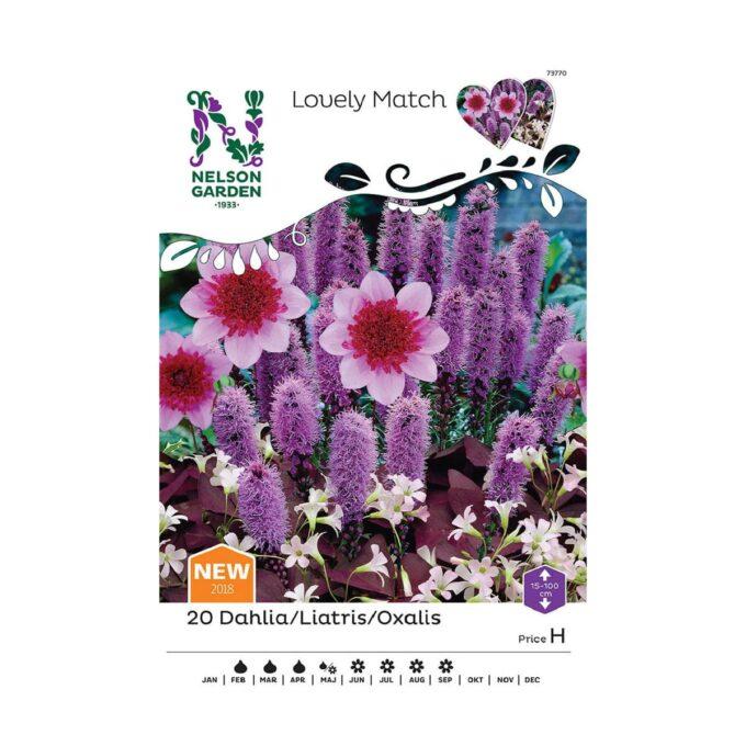 Frøpakke av Nelson Garden blomsterløk - lilla mix av ulike blomster