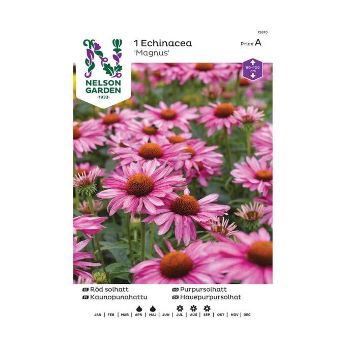 Nelson Garden blomsterløk - rosa purpursolhatt Echinacea purpurea