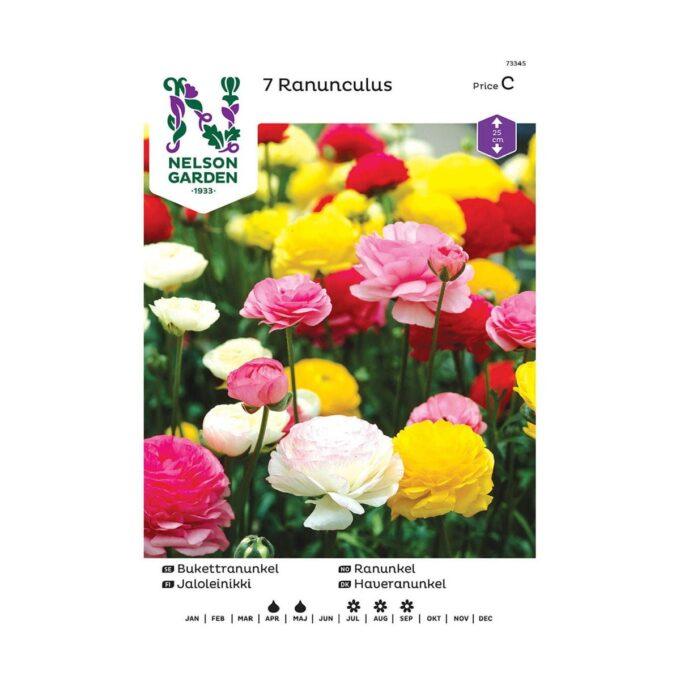 Nelson Garden blomsterløk - ranunkel ranunculus i blandede farger