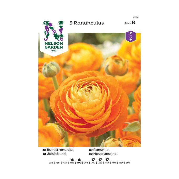 Nelson Garden blomsterløk - oransje ranunkel ranunculus
