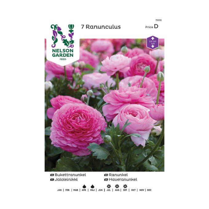 Nelson Garden blomsterløk - rosa ranunkel ranunculus