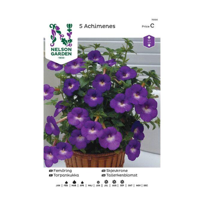 Nelson Garden blomsterløk - storblomstrende, blå, Achimenes