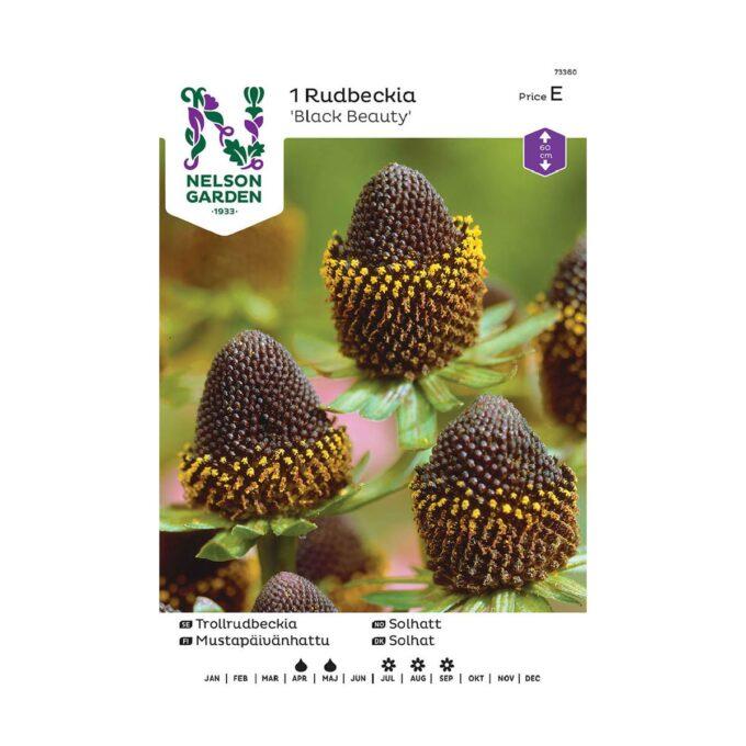 Nelson Garden blomsterløk - brunsvart solhatt Black Beauty