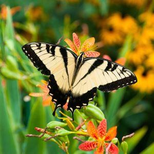 Vakre sommerfugle sitter på blomsten