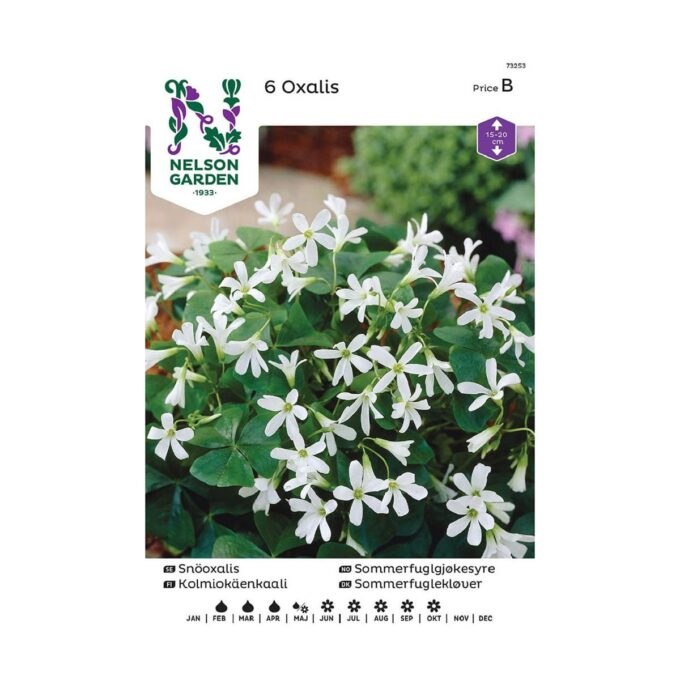 Nelson Garden blomsterløk - sommerfuglgjøkesyre Oxalis
