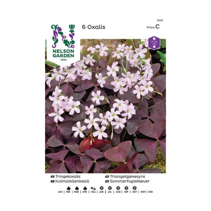 Nelson Garden blomsterløk - triangelgjøkesyre Oxalis triangularis