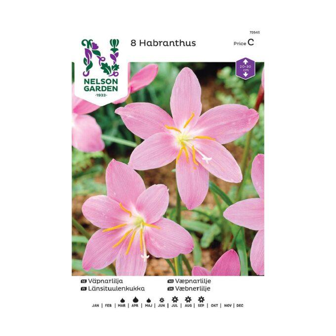 Nelson Garden blomsterløk - rosa Habranthus robustus