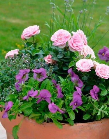 diverse blomster i krukke