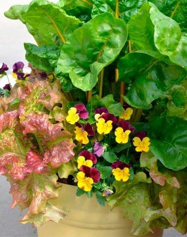 Dekorative blomster i potte