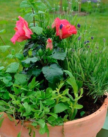 Diverse blomster i potte