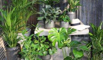 Grønne inneplanter