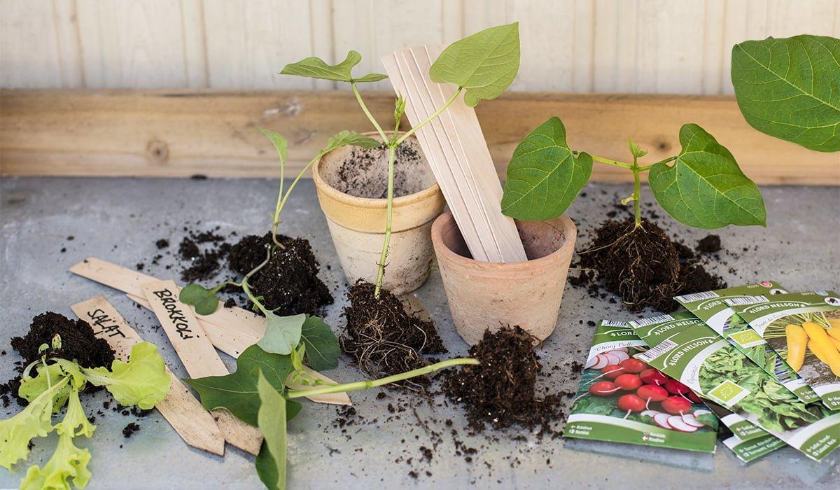 Frøpakker planting og så frø