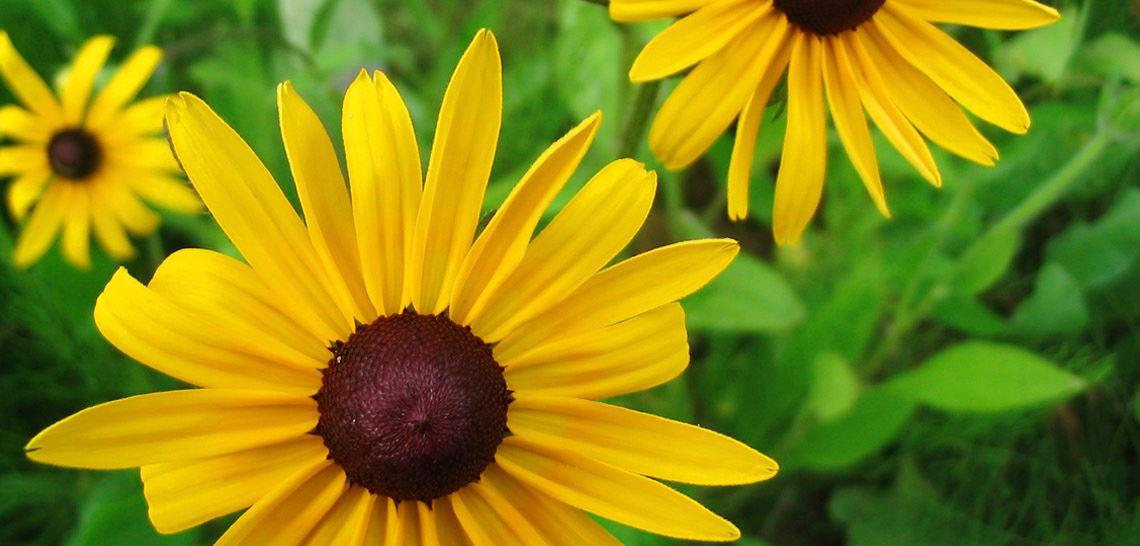 Nærbilde av gul høstblomstrende høstaster