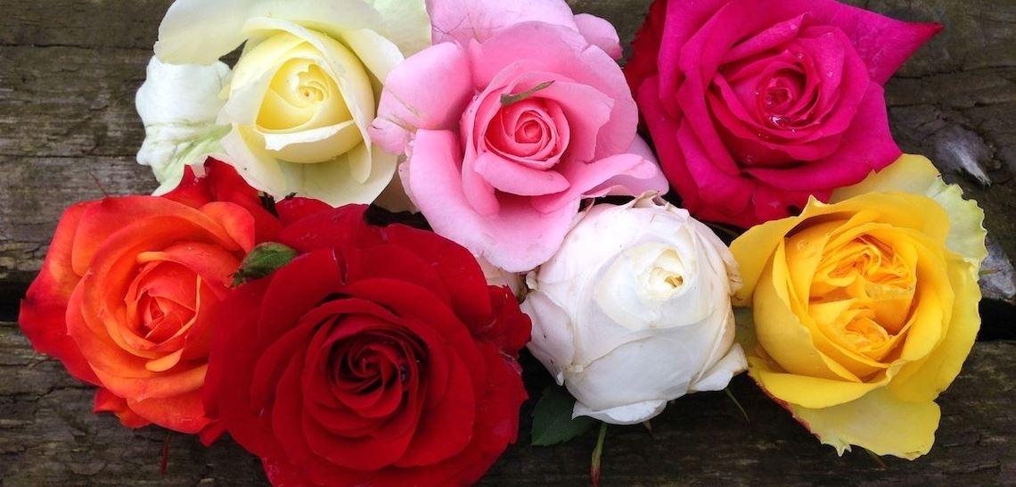 Gul, rosa, rød, hvit, oransje og rød rose