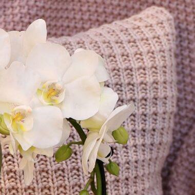 Hvit orkideen Phalaenopsis