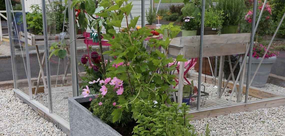 Spiselige planter i drivhus