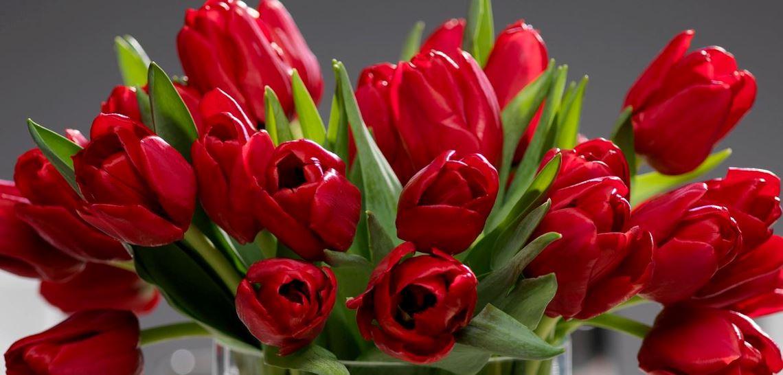Rød tulipanbukett til jul