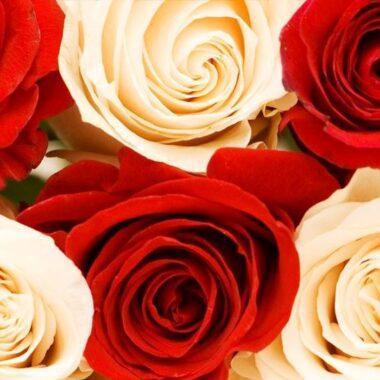 Hvite og røde roser med hjertet