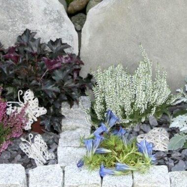 diverse blomster på graven