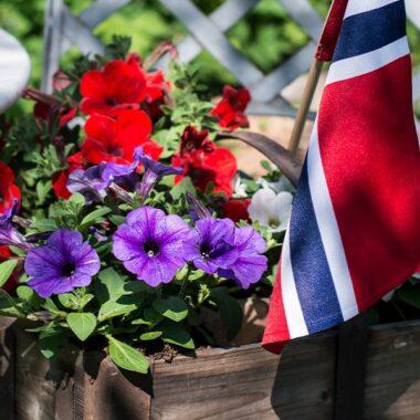 Petunia blomster og flagg til 17. mai