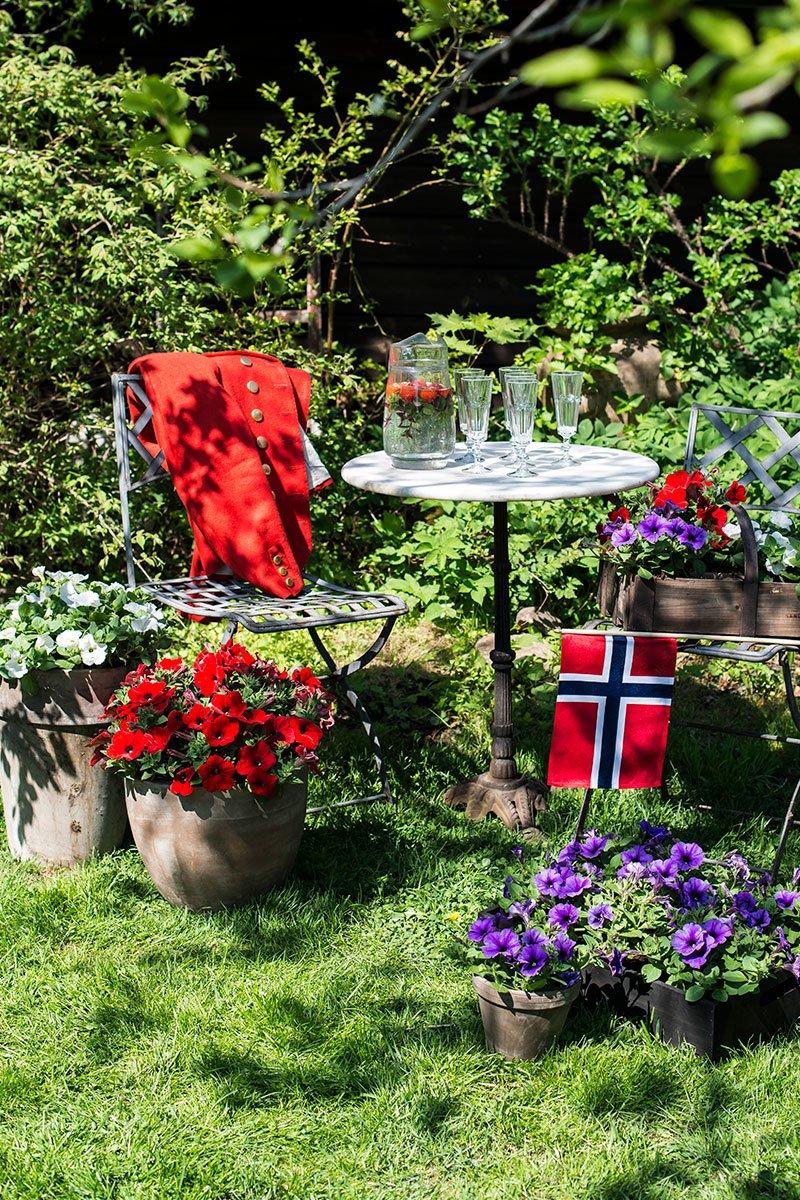 Store og små krukker med petunia blomster,i rødt, blå og hvitt