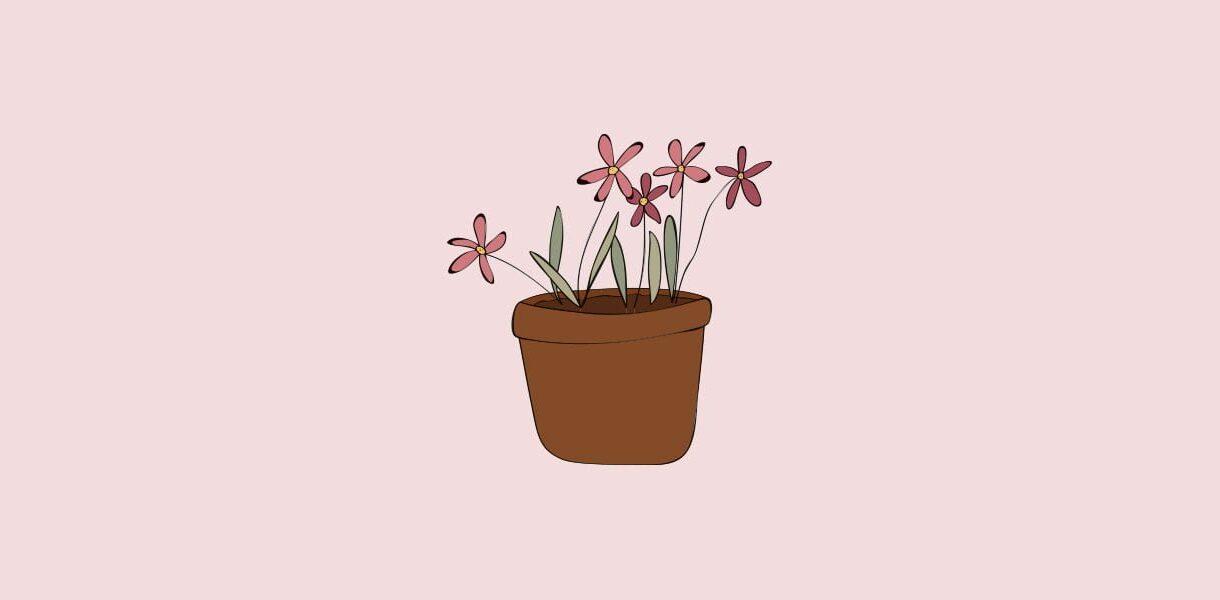 Hageland Hagekartoteket - Blomster i sesong