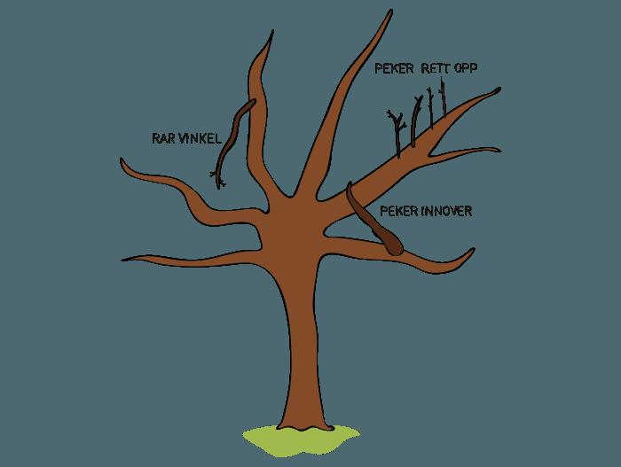 Hageland Hagekartoteket - beskjæring av frukttrær