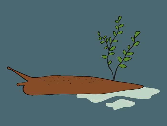 Hageland Hagekartoteket - Grønnsakshage snegler er hovedtrusselen