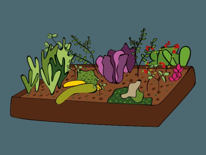 Hageland Hagekartoteket - Grønnsakshage plantes i plantekasser