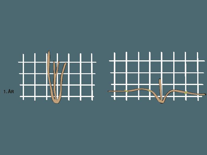 Hageland Hagekartoteket - beskjæring av klatreroser 1 år