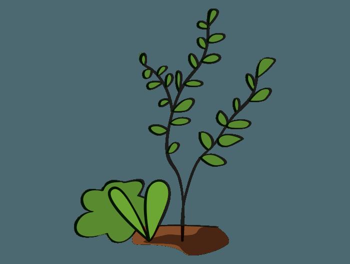 Hageland Hagekartoteket - Plassering av klatreplanter