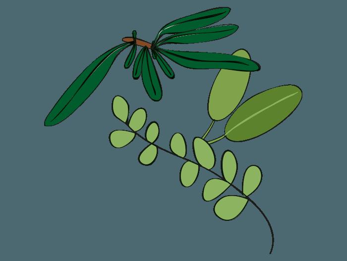 Hageland Hagekartoteket - beskjæring av krydderurter