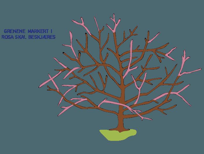 Hageland Hagekartoteket - grenene på prydbusker og trærne merket med rosa beskjæres