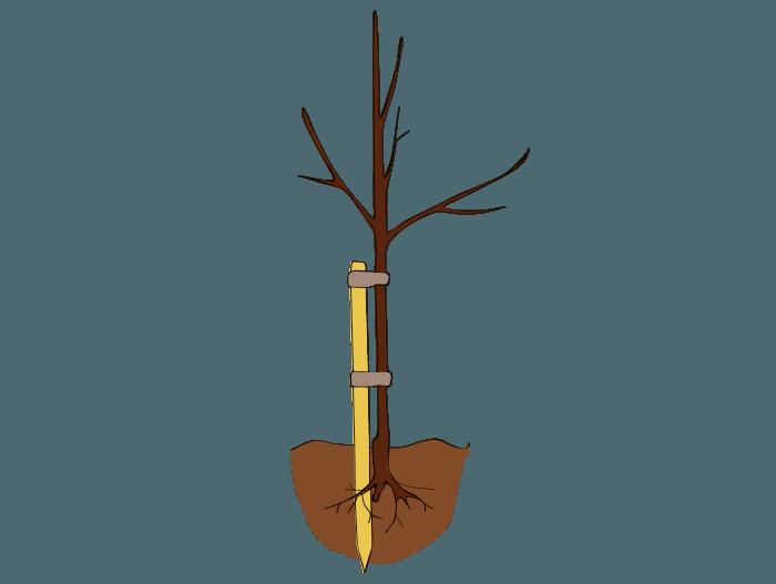 Hageland Hagekartoteket - før du planter prydbusker og trær
