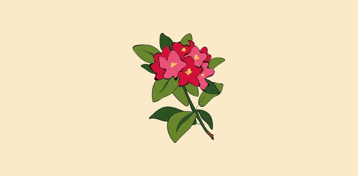 Hageland Hagekartoteket - Rhododendron