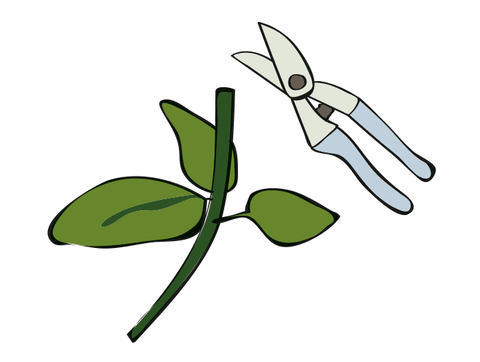 Hageland Hagekartoteket - rhododendron beskjæring