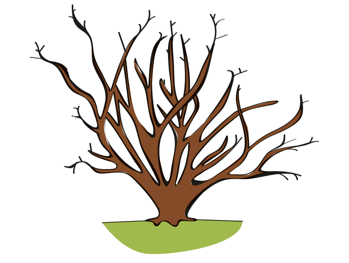 Hageland Hagekartoteket - etter en tid kan rhododendron bli glissen