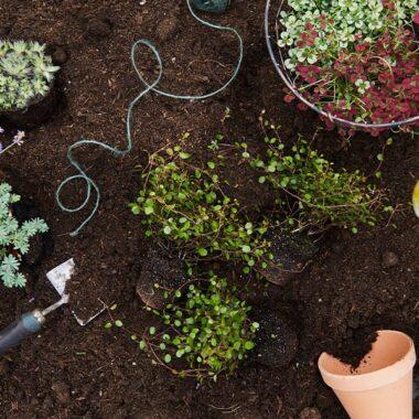 potter blomster og redskap liggende på jord i bed