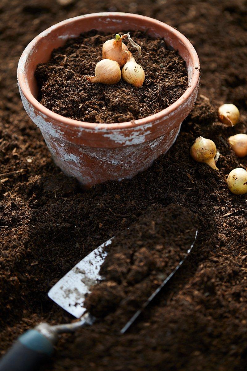 potte med jord og setteløk spade