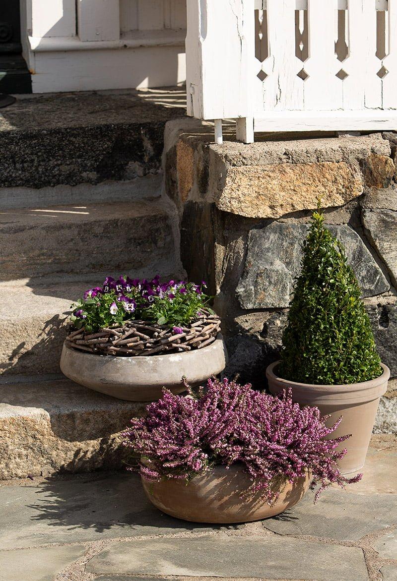 stemor, lyng og buksbom i potter på trapp