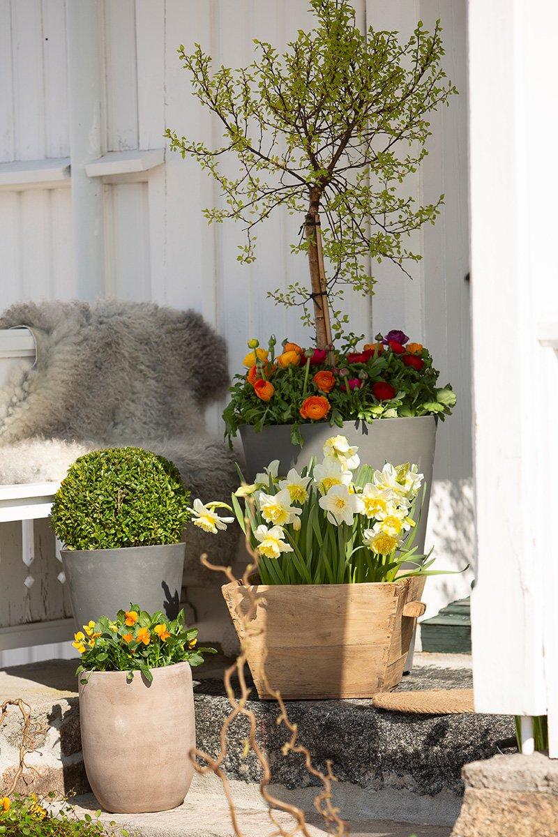 inngangsparti med store krukker fulle av blomster