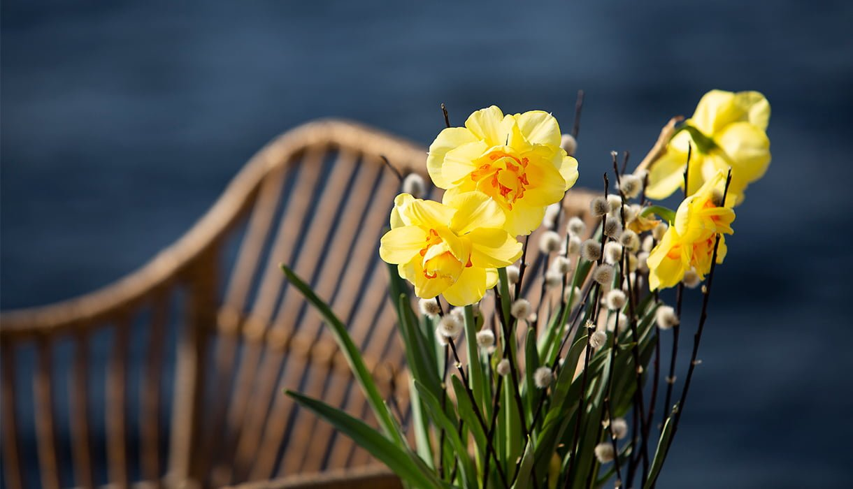 nårbilde av påskeliljer og gåsunger